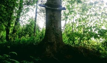 Baum frisst Wegweiser