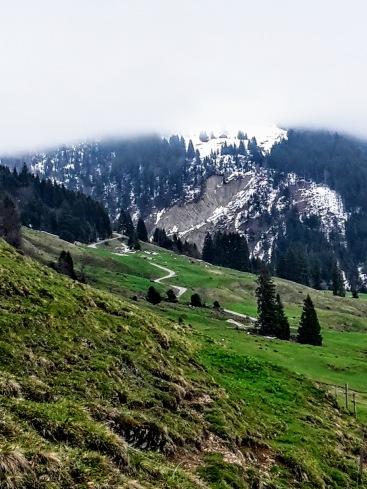 Balderschwanger Alpe