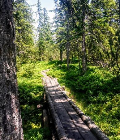 Holzstege führen durch das Löckernmoos