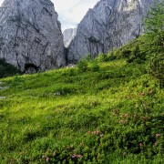 Almrausch und Felsen