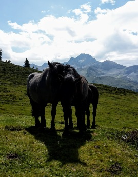 Alm-Liebe - endlich Pferde statt Kühen
