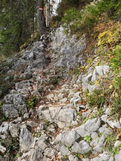 Felsige Abschnitte im Wald