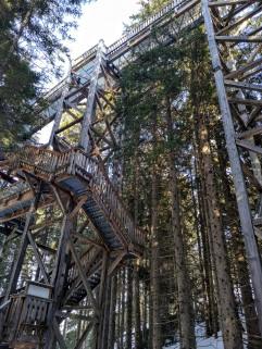 Massives Lärchenholz