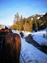 Per Pferdeschlitten retour