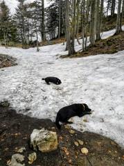 Die Hundis freut der Schnee ab 1200hm