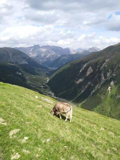 Abstieg Richtung Lago Livigno