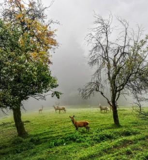 Wildgehege Pankrazberg