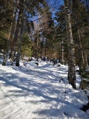 Skitouren-Aufstiegsroute im Wald