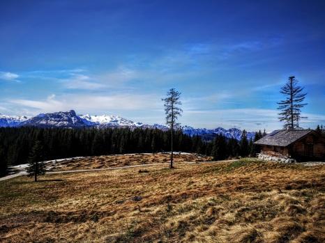 1290m: Dachstein-Blickkontakt